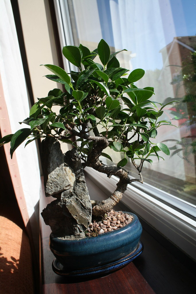 The Best Plant For Your Workplace Is A Bonsai Tree